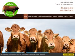 Elevage vaches limousines 19